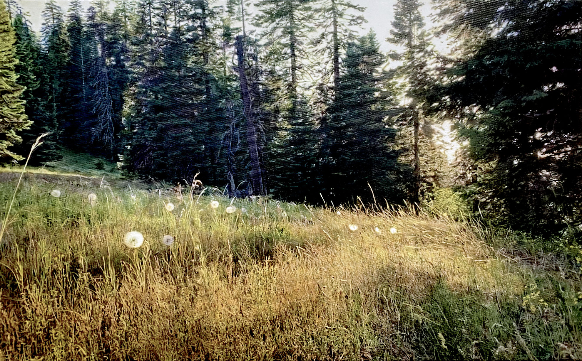 Photorealistic painting of a meadow