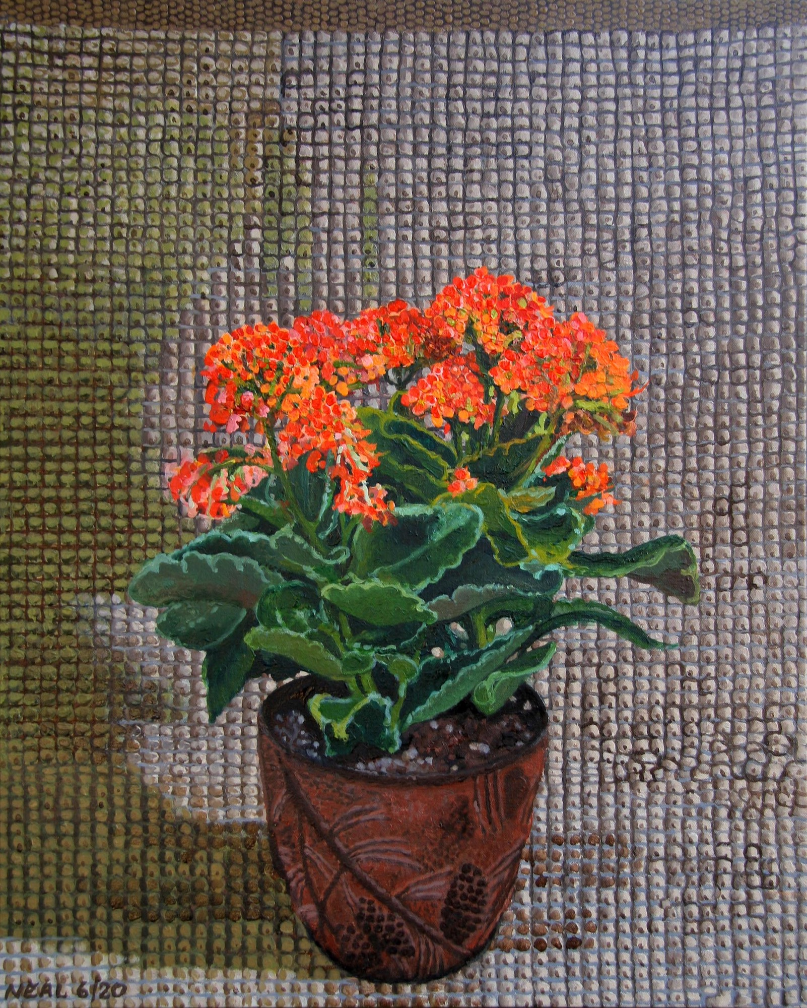 flowering plant on a textured grid